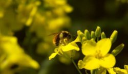 Integrowana ochrona roślin