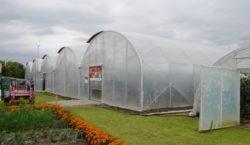 Obiekty do uprawy pod osłonami