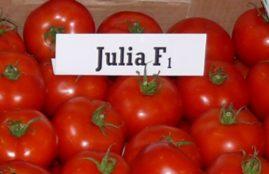 JULIA F1