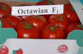 OCTAWIAN F1