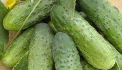 Objawy niedobory składników pokarmowych w ogórku