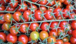 Niedobory makroelementów w pomidorze